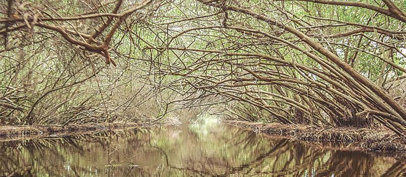 La Comisión Nacional Forestal levantará bandera blanca en el mantenimiento y limpieza de mil 200 hectáreas del estero El Chupadero.